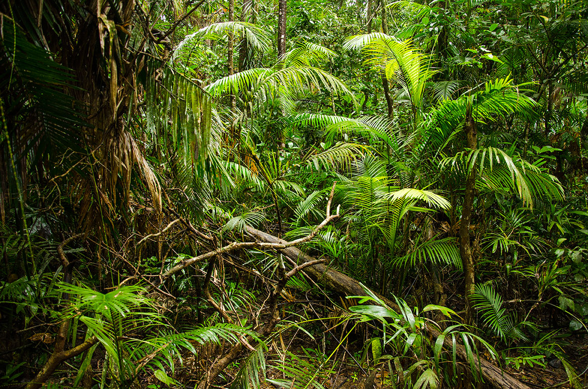 Daintree_Forest_1