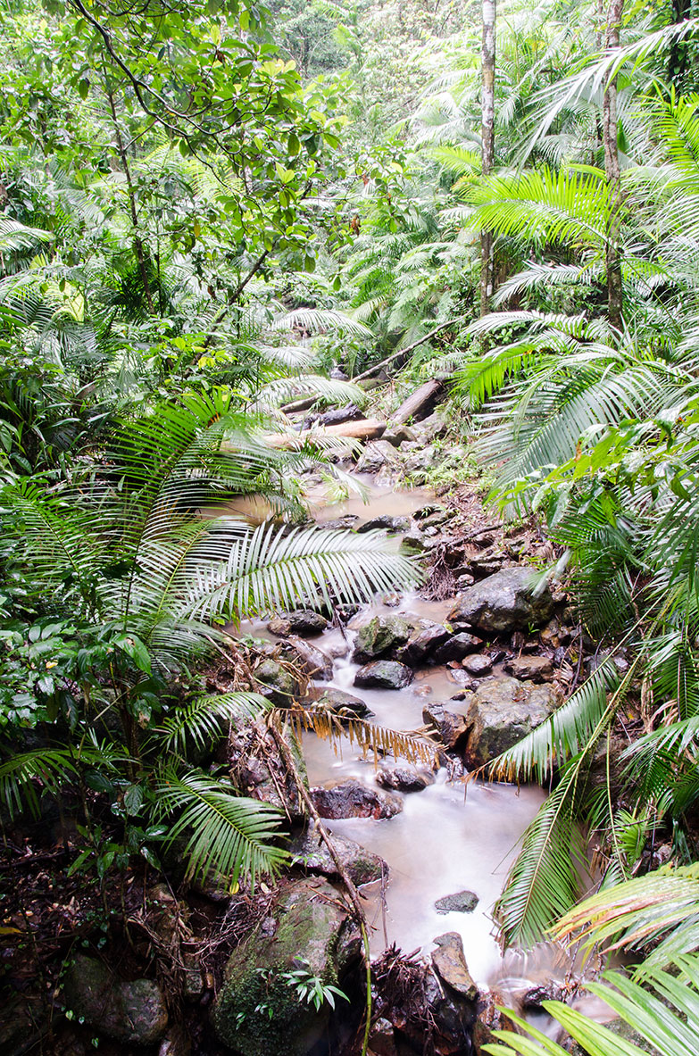 Daintree_Forest_17