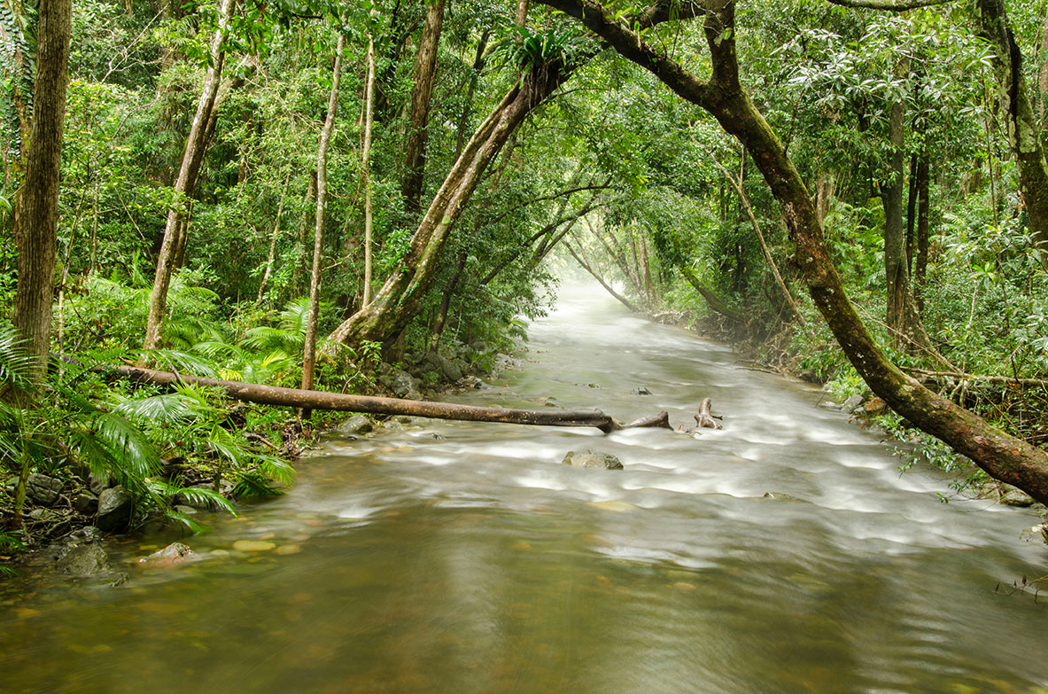Daintree_Forest_6