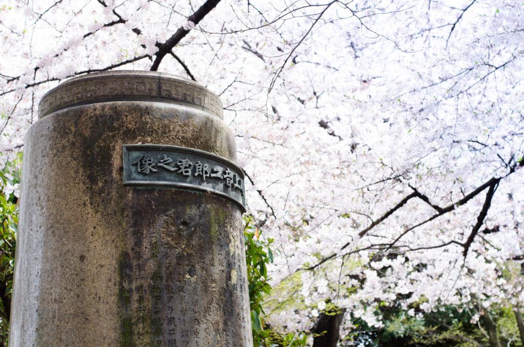 Tokyo_cemetery_Kirschblüte_clara-wolff